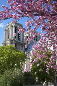 Paris 2009 393 200x300 Notre Dame Cathedral in Paris